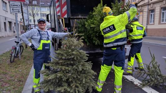 Insgesamt werden jedes Jahr rund 230 Tonnen Weihnachtsbäume abgeholt.
