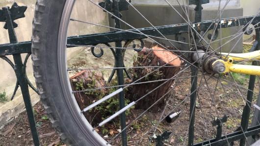 Die Bürgerinitiative Baumschutz  findet, dass zu viele alte große Bäume in Braunschweig verschweinden.