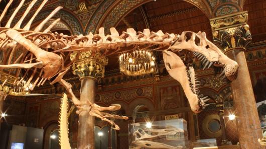 Die Laufzeit der Sonderausstellung Spinosaurus – Der rätselhafte Riese des Staatlichen Naturhistorischen Museums in der Burg Dankwarderode wird um acht Wochen bis zum 9. September verlängert.