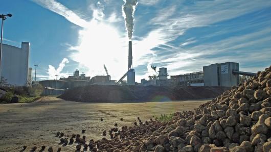 Die diesjährige Zuckerkampagne startet im Nordzucker Konzern am 12. September.