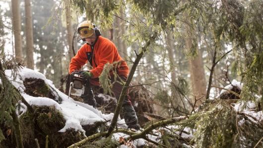 Knapp ein Jahr ist es her, dass der verheerende Sturm Friederike am 18. Januar 2018 in nur wenigen Stunden auch viele Wälder vernichtete.