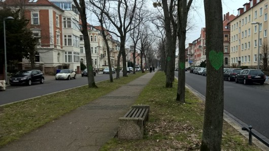 Seit Dienstag haben die Bäume in der Jasperallee in Braunschweig grüne Herzen.