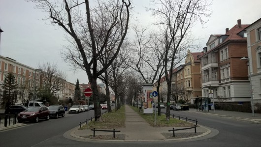 Am Dienstag werden die nächsten Bäume auf der Jasperallee in Braunschweig gefällt. (Archivbild)