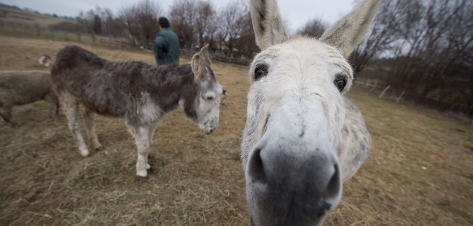 Nanu, wer läuft denn da durch Rautheim? Ein Esel war am Montagabend in der Nachbarschaft unterwegs. (Symbolbild)