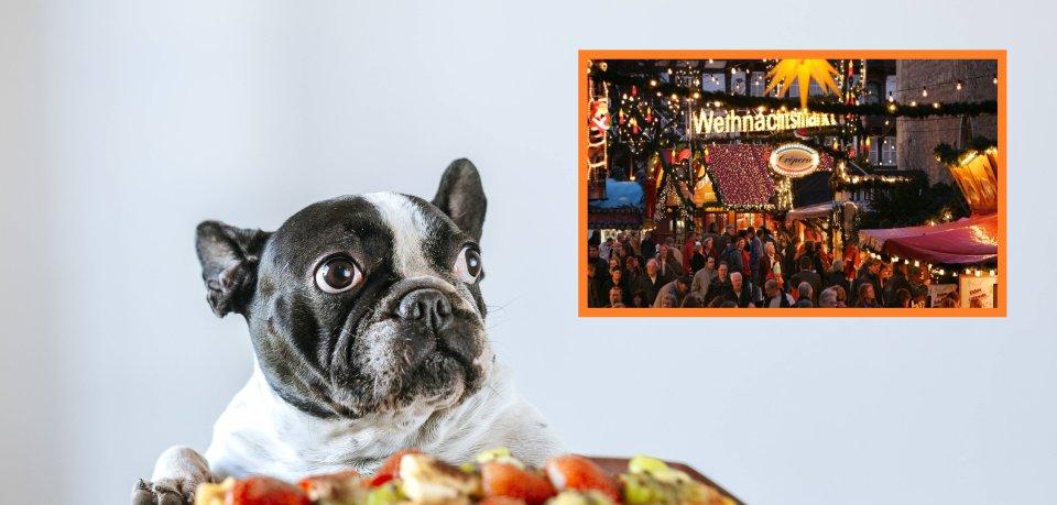 Der Weihnachtsmarkt Braunschweig ist auf den Hund gekommen. Für deinen Vierbeiner gibt es dieses Jahr ein besonderes Angebot.