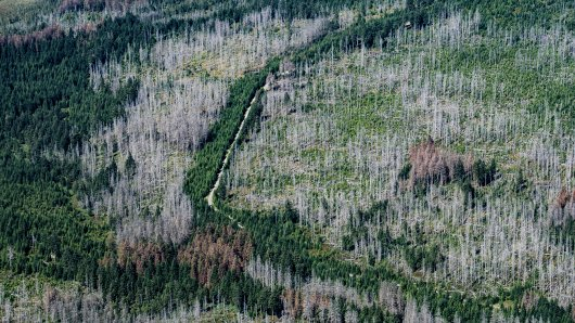 Blick auf den Nationalpark Harz mit teilweise abgestorbenen Fichten. Viele Bäume im Harz sind durch Stürme, Hitze und Borkenkäfer abgestorben.