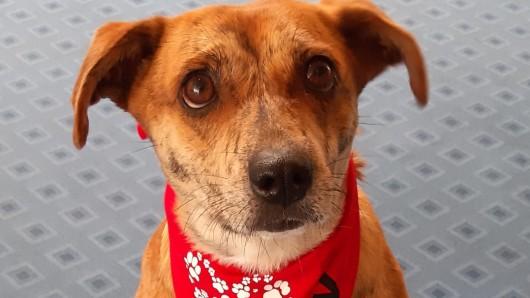Hund Lizzy sorgt für Begeisterung bei den Bewohnern eines Alloheims in Braunschweig.