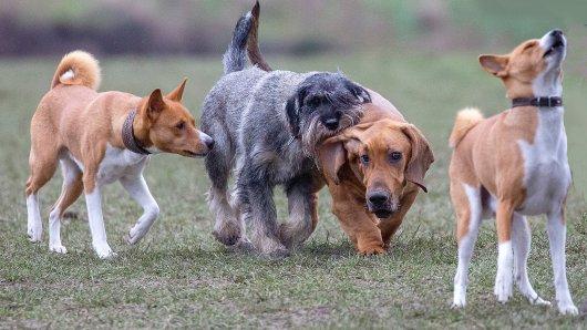 Neue Hundewiesen in Braunschweig vielleicht schon ab Ende Mai. (Symbolbild)