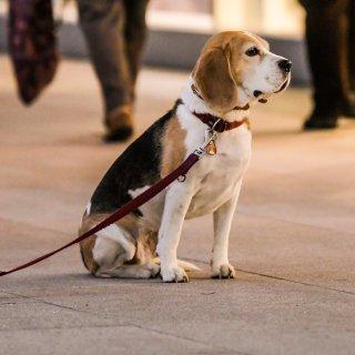 Ein Hund wurde in Braunschweig falsch angebunden. (Symbolbild)