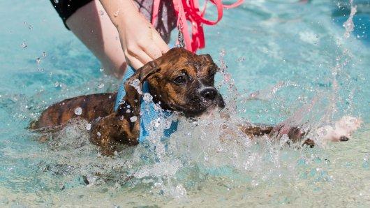 Nach einem Jahr Corona-Pause lädt das Freibad Raffteich in Braunschweig wieder zum Hundeschwimmen ein. (Symbolbild)