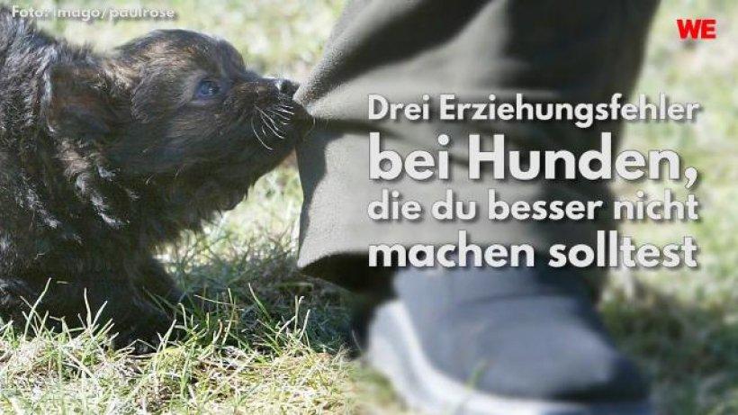 Hund in Salzgitter: Trauer im Tierheim - zweiter Welpe