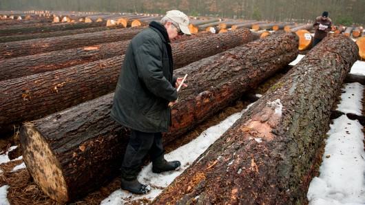 Holzhändler Nobert Buddenkotte nimmt nahe Oerrel bei Munster auf einem Holzlagerplatz einen Douglasienstamm in Augenschein.