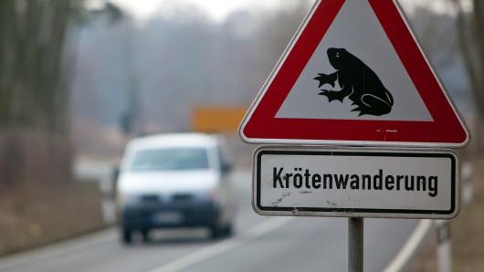 Vorsicht gilt im Landkreis: Die Krötenwanderungen haben begonnen (Symbolbild).