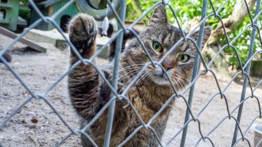 Die Katzenfreunde Königslutter freuen sich über die Spende (Symbolbild).