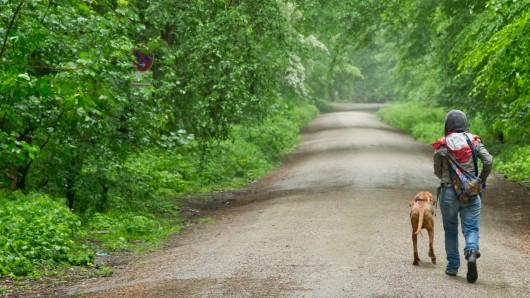 Im Wald könnte es derzeit gefährlich werden. (Symbolbild)