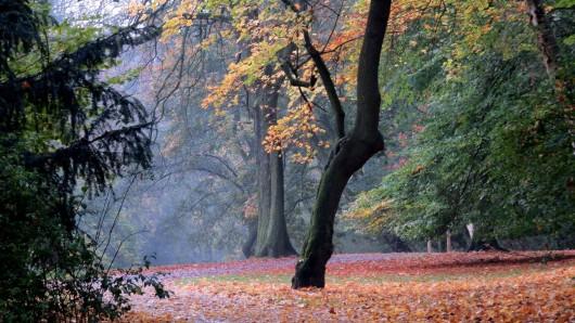 Angenehme Herbststimmung in . Vielen Dank an Gabriela Burscheid
