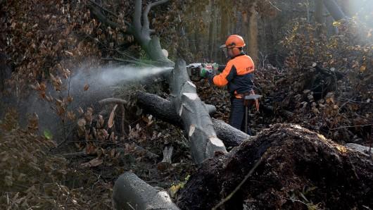 Für einige Bäume war Burglind zu viel. (Archivbild)