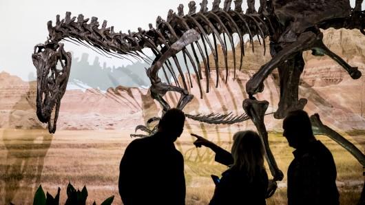 Der Dinosaurier Allosaurus ist als Teil der Ausstellung Jurassic Harz. Dinosaurier von Oker bis Wyoming in den Ausstellungshallen im Naturhistorisches Museum zu sehen.