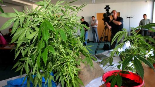 Rund drei Kilogramm Marihuana haben die Ermittler in Bad Harzburg gefunden. (Archivbild)