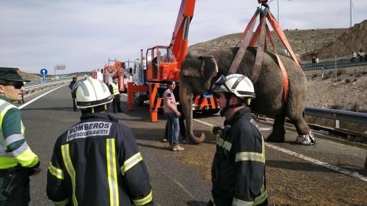 Rettungskräfte versuchen, einen Elefanten mit einem Kran hochzuheben. Der Lkw, in dem die Elefanten transportiert wurden, kippte um und verlordie Ladung.
