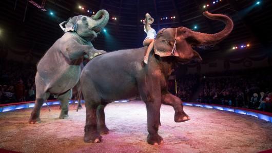 Die Elefanten-Show im Circus Krone (Archivbild).