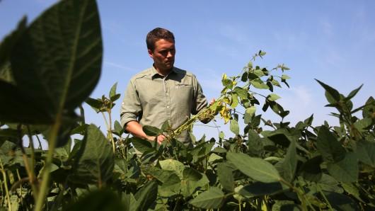 Ein Biobauer auf seinem Sojafeld (Symbolbild).
