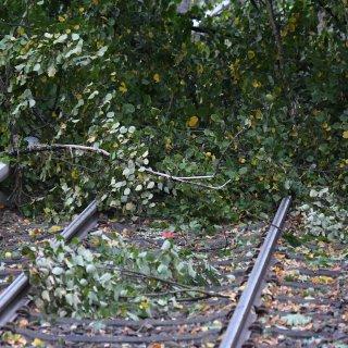Ein Baum auf den Gleisen sorgt für Probleme (Archivbild).