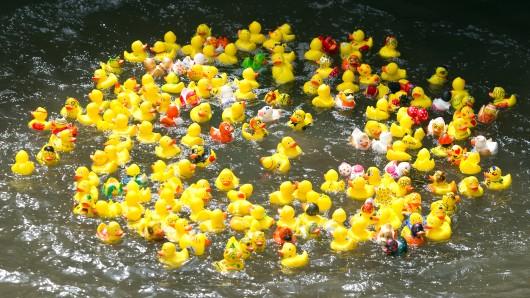 Am Sonntag schwimmen die Enten wieder um die Wette (Archivbild).