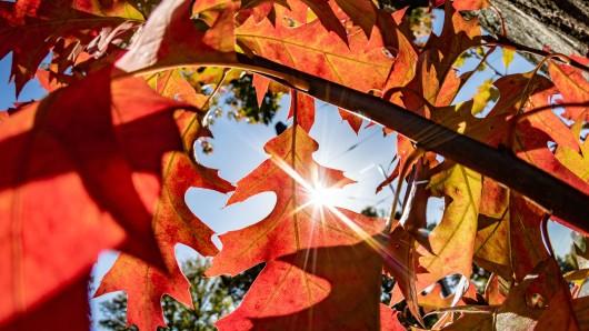 Der Herbst zeigt sich bisher von seiner schönen Seite (Symbolbild).