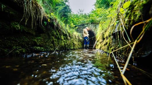 Die Harzwasserwerke hatten im September, November und Dezember 2018 aufgrund der anhaltenden Trockenheit Maßnahmen ergriffen, um die Versorgungssicherheit auch im schlechtmöglichsten Fall, einem Doppeltrockenjahr, garantieren zu können.