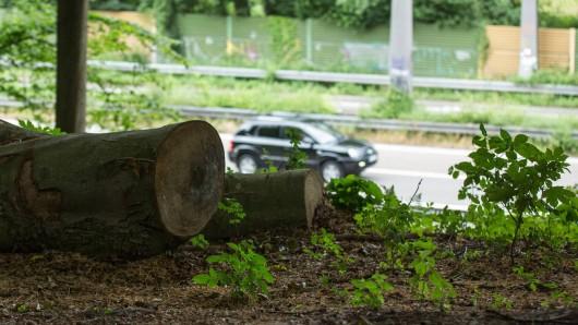 An der A39, A391 sowie der A36 müssen die Bäume und Büsche gepflegt werden (Symbolbild).