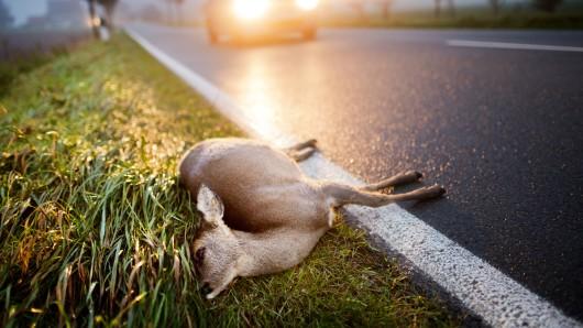 Die Hirschkuh war plötzlich auf die Straße gelaufen. (Symbolbild)