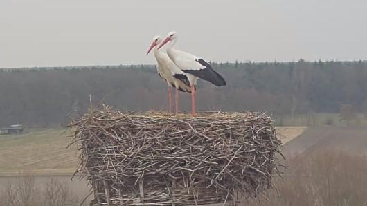 Immerhin hat Storch Fridolin in Leiferde bei dem Wetter auch mal Besuch von einer Dame.