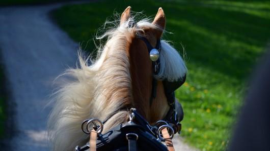 In Salzgitter hat sich ein Pferd dermaßen erschreckt, dass es eine Kutsche zu Fall brachte (Symbolbild).