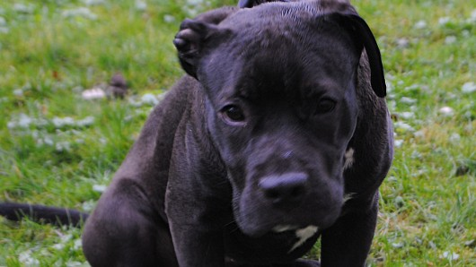Bertha hatte alles andere als einen schönen Start ins Hundeleben. Sie wartet jetzt im Tierheim auf ein neues Zuhause.