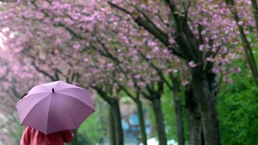 Das frühlingshafte Wetter soll in den nächsten Tagen durch Regen und niedrigere Temperaturen abgelöst werden (Archivbild).