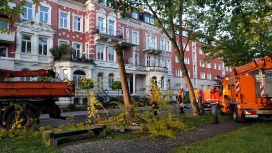 Am Dienstag haben in der Jasperallee in Braunschweig wieder Fäll-Arbeiten begonnen. Protest gab es am frühen Morgen nicht.