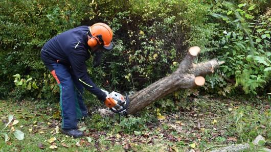 Im Mai waren zuvor schon fast 60 abgestorbene Bäume im Östlichen Ringgebiet sowie in der Parkanlage Viewegs Garten gefällt worden (Symbolbild).