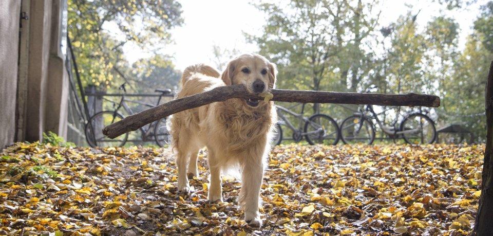 Auf den ersten Blick dachte das Herrchen, sein Hund habe einen Stock im Maul - doch weit gefehlt. (Symbolbild)