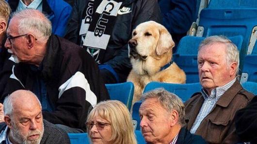 Hund Yardley sieht sich fast jedes Spiel seines Lieblingsvereins an.