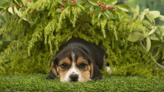 Der Hund ist hinter der Katze das zweitbeliebteste Haustier in Deutschland.