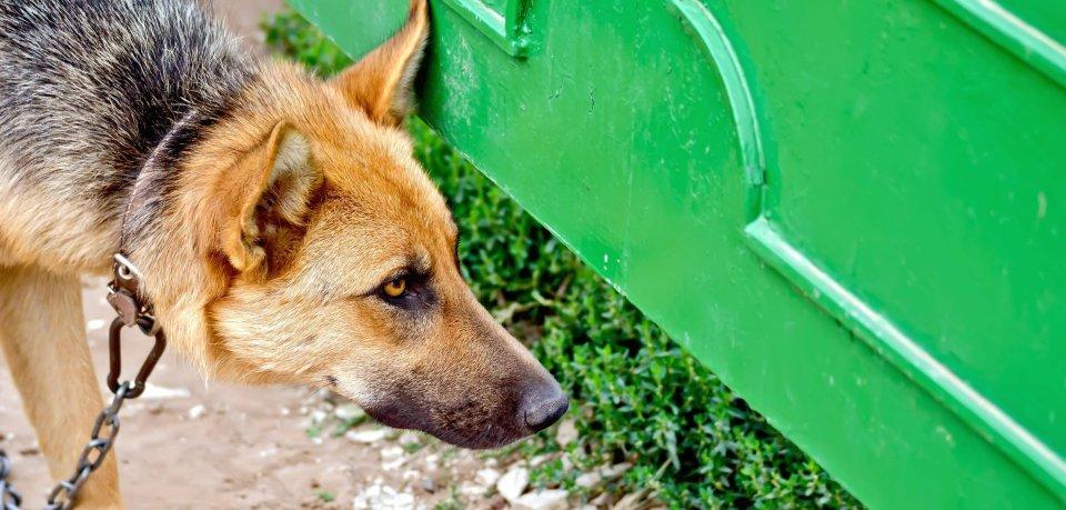 Ein Hund ist an ein Stahltor gekettet worden. (Symbolbild)