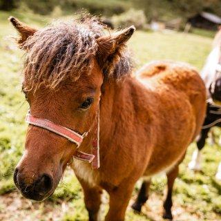 Das Pony konnte sich ich im Kreis Peine nicht selbst befreien. (Symbolbild)