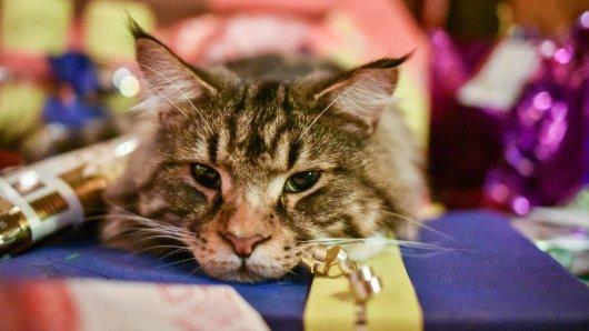 Ein Tier sollte man sich nur ganz bewusst zulegen; als Überraschungsgeschenk zu Weihnachten ist es absolut ungeeignet.