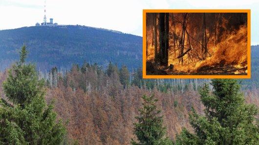 Droht dem Harz bald ein ähnliches Szenario wie aktuell den Australiern? (Symbolbild)