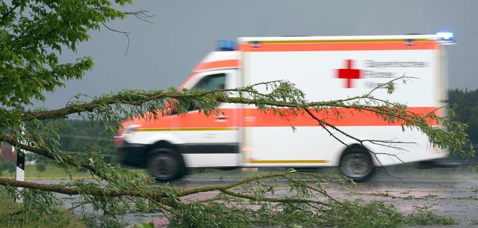In Wernigerode im Harz wurde eine Frau von einem Baum getroffen. Sie verstarb. (Symbolbild)