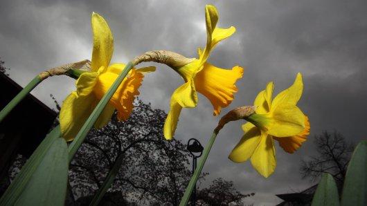 Das Wetter zeigt sich am Wochenende von seiner wechselhaften Seite...