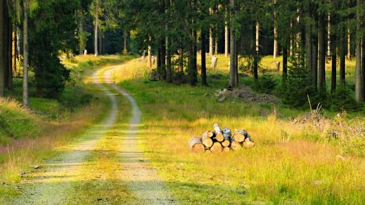 Ein Jäger geht im Wald spazieren, doch noch ahnt er nichts...