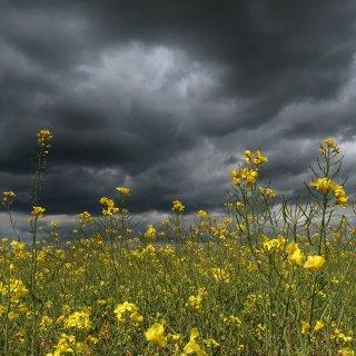 Das Wetter am langen Wochenende wird erstmal ungemütlich – doch danach kommt die Wende. (Symbolfoto)