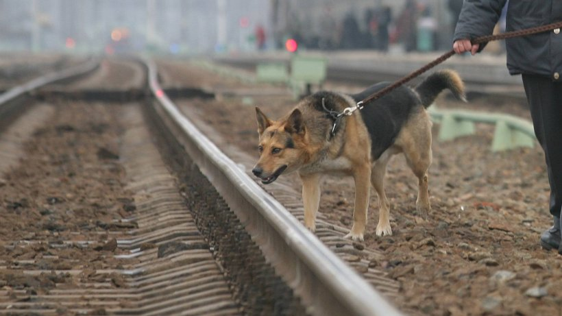 Wolfenbüttel: Fieberhafte Suche am Bahnhof – aus diesem Grund